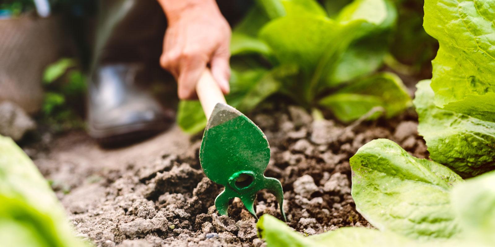 Hoeing Your Garden