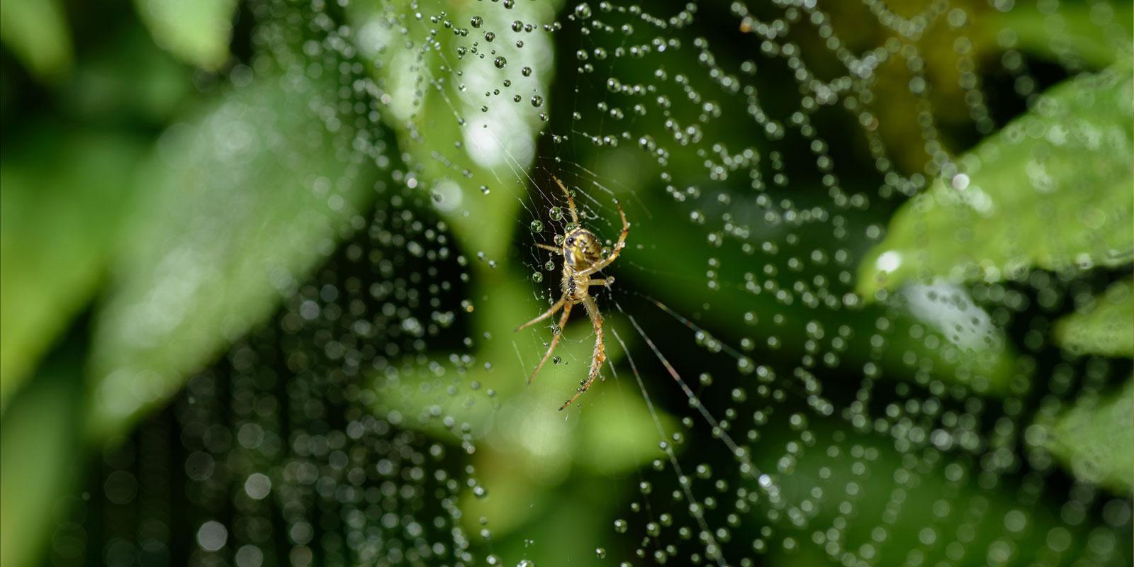 The Spider Blog